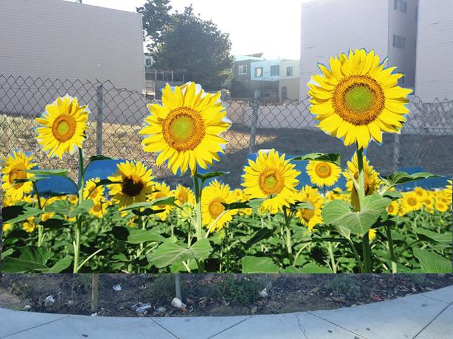 garden lot